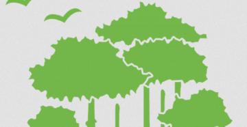Вырубка, закупка и продажа леса через ЕГАИС: основные правила и требования
